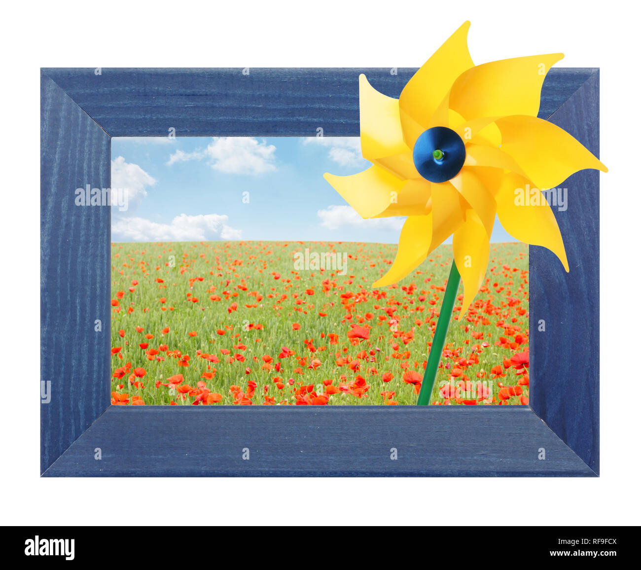 Beautiful poppy field in border with yellow pinwheel - Stock Image