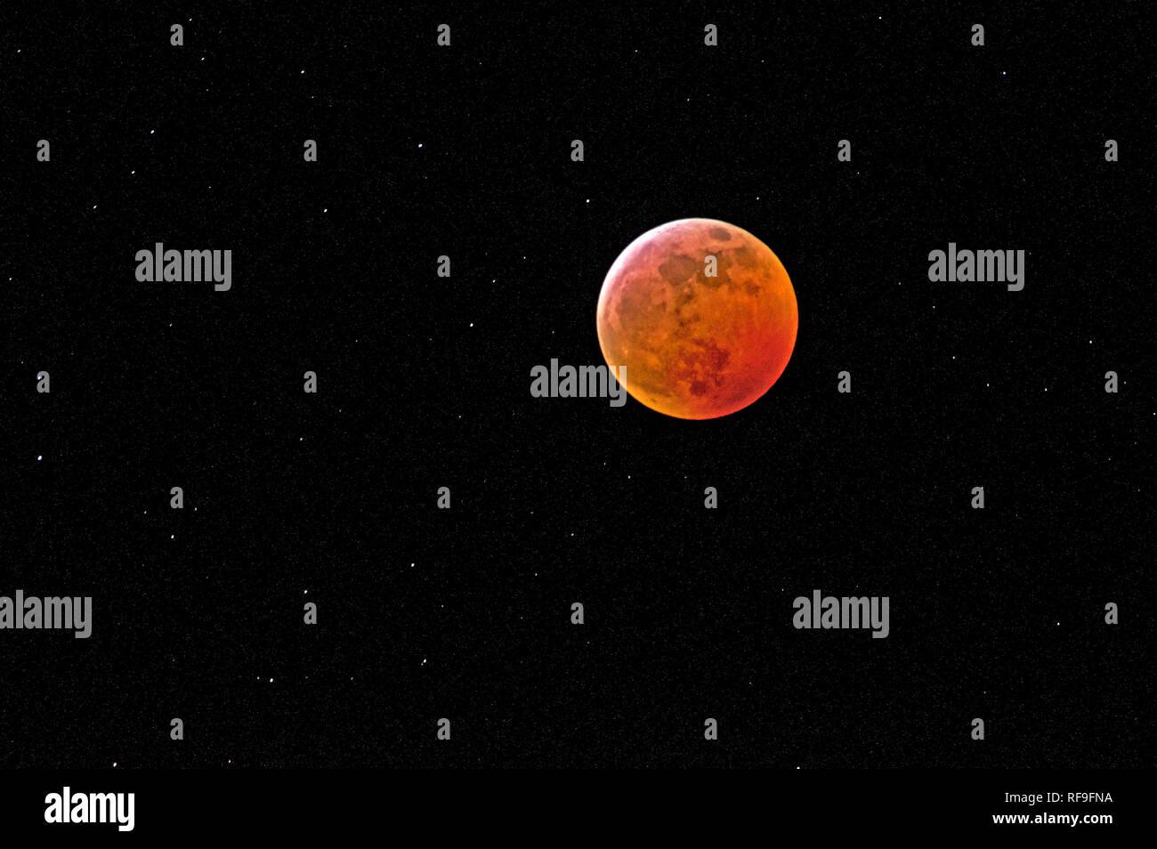 Wolf Blood Moon - Stock Image