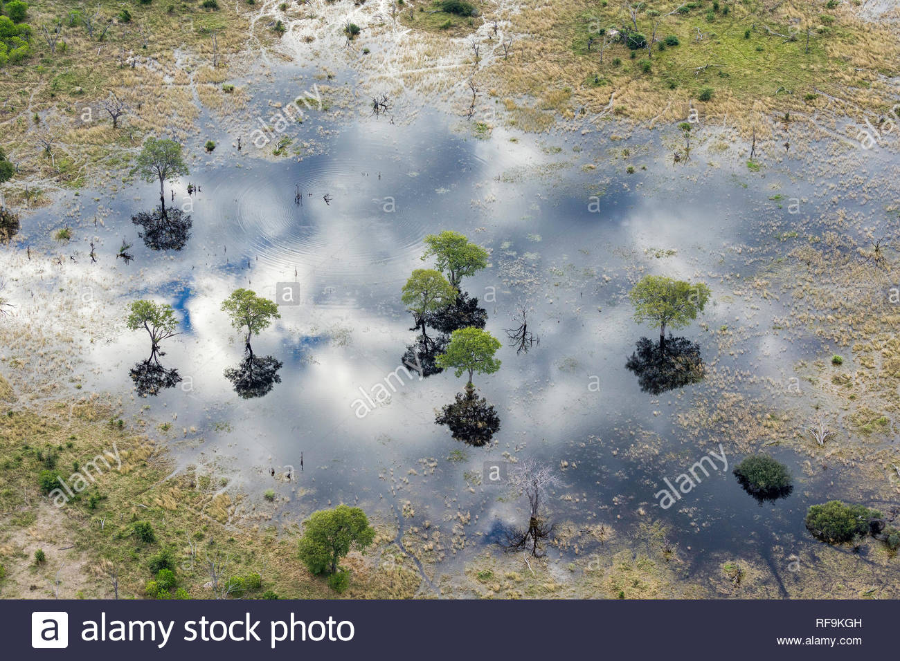 Aerial view of Khwai River, Okavango Delta, Botswana, Africa - Stock Image