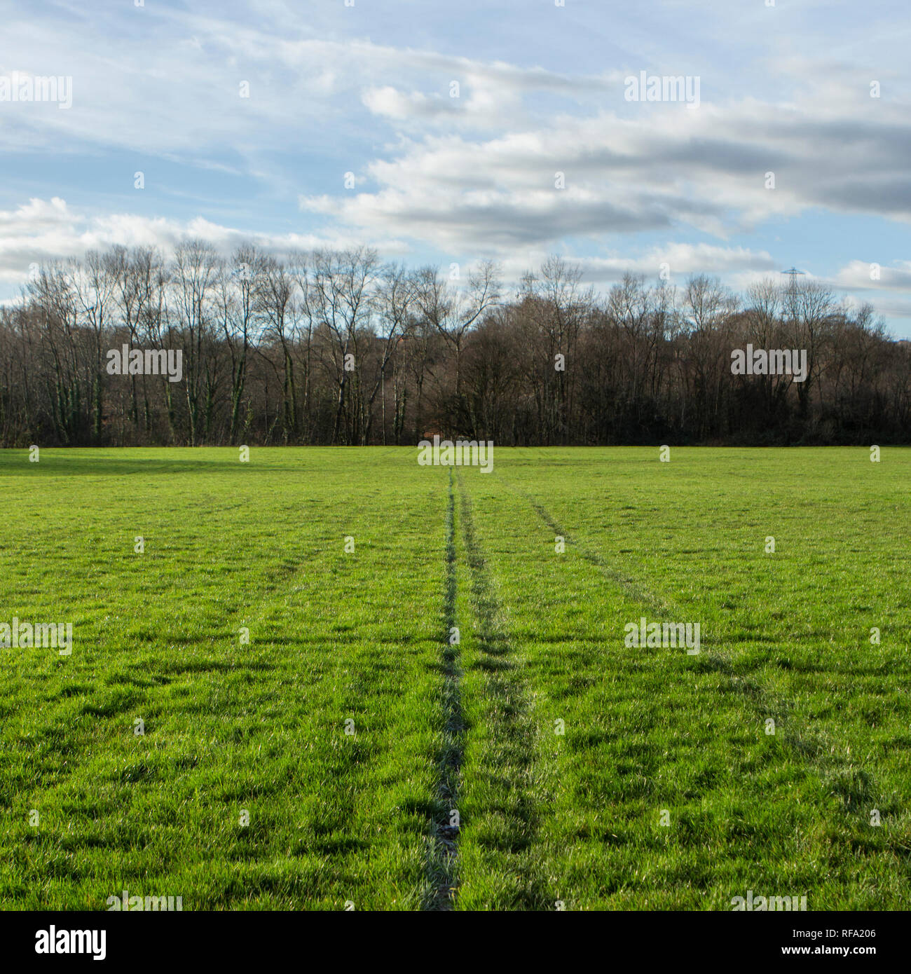 Study on the rugby pitch at Llandaff, Cardiff. - Stock Image
