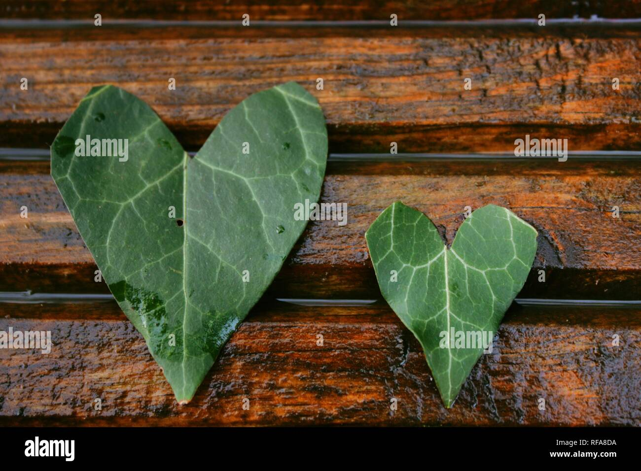 Leaf hearts on stripped wood - Stock Image