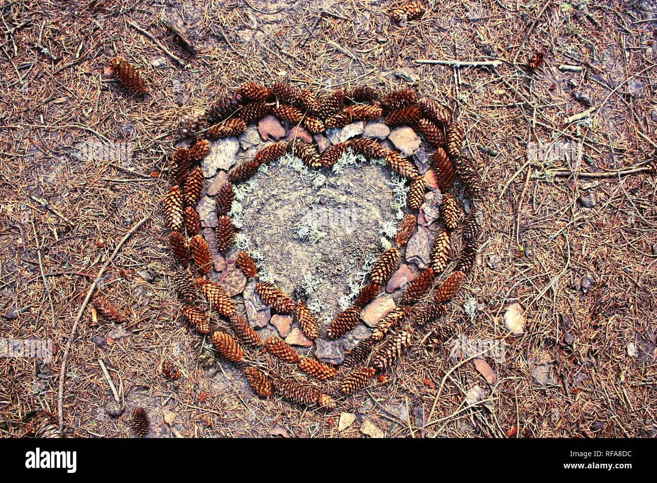 Heart of pinecones and natural objects - Stock Image