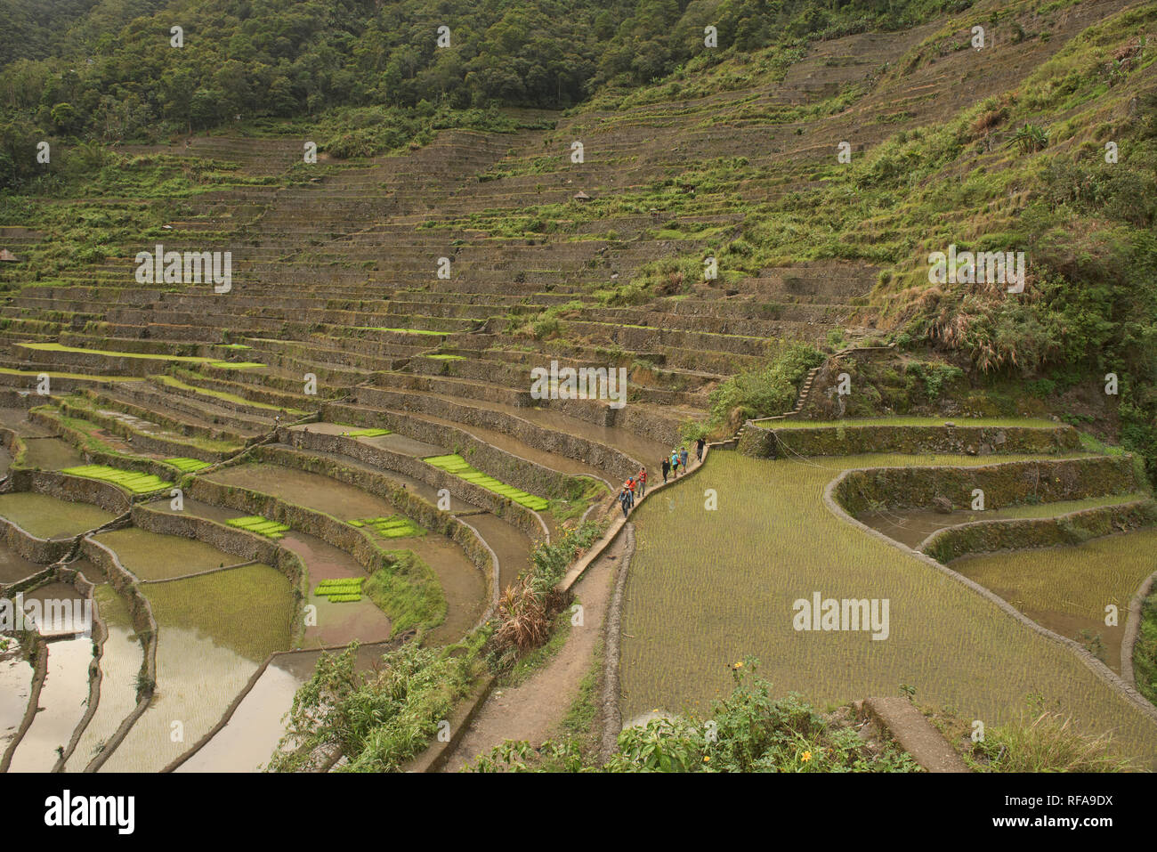 Hiking through the amazing UNESCO rice terraces of Batad, Banaue, Mountain Province, Philippines - Stock Image
