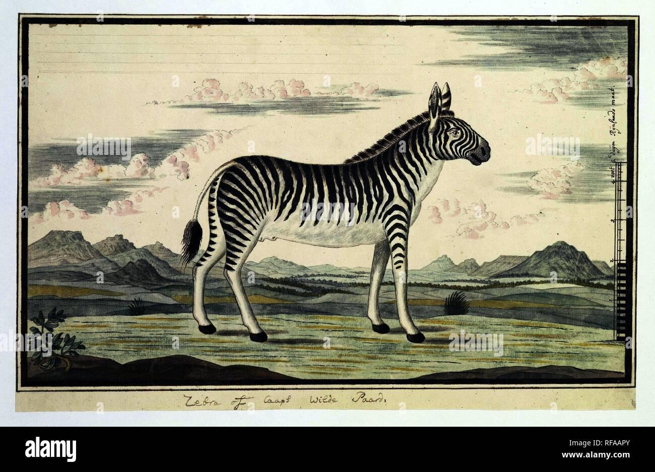 zebra dating qatar single dating