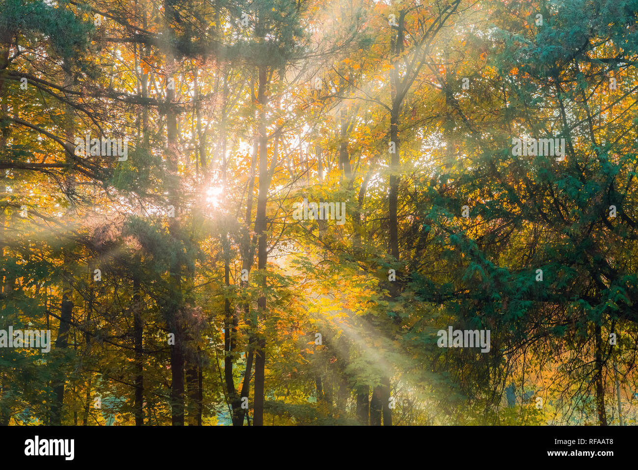 Warm autumn scenery in a forest, with the sun casting beautiful rays of light through the mist and trees - Stock Image