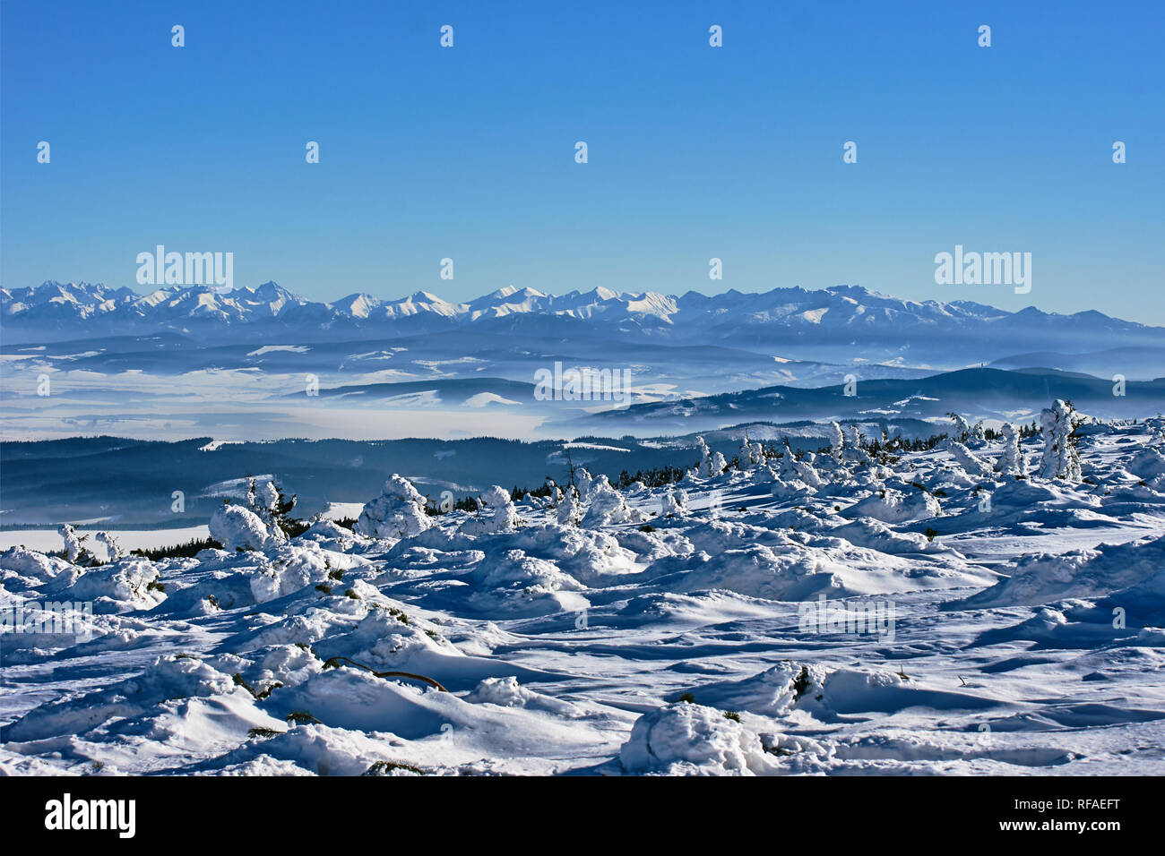 Snow covered spruces in the mountains in winter Beskidy in Poland - Stock Image