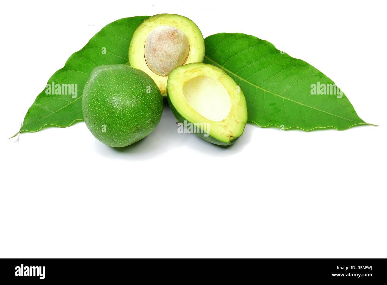 Avocado is a fruit-producing plant with the same name. This plant originates from Mexico and Central America and is now widely cultivated in South - Stock Image