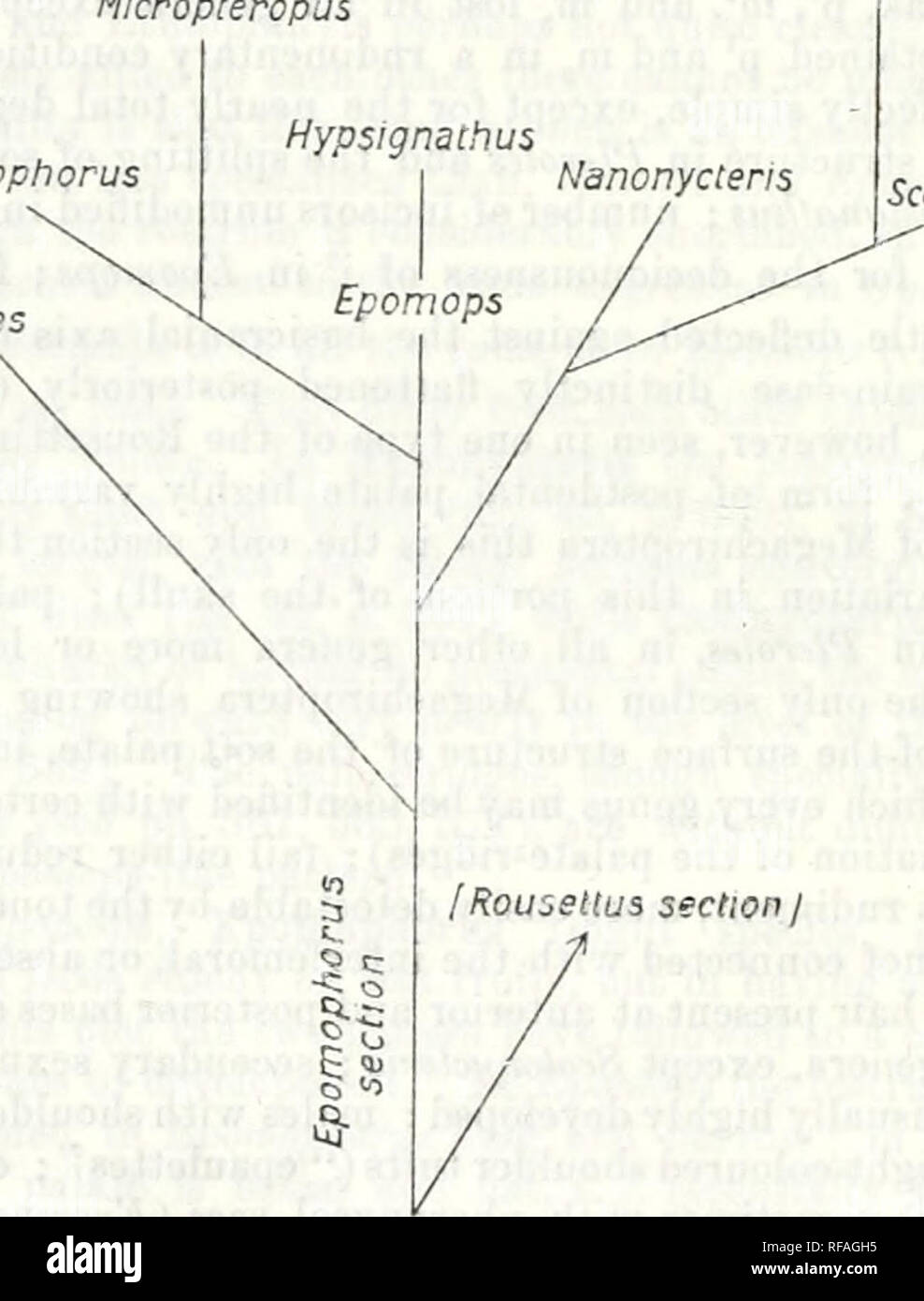 . Catalogue of the Chiroptera in the collection of the ... Museum. Ivi IXTEKRKLATIONS OF GKNERA. to, or iu the case of one or a tew species a little be3'oiid, Victoria ]Syun/,a, south to Angola. Eeiiguela, and Damaralaud. The genera of this section fall into three natural groups (branches, subsections) :—(1) The Epomops branch, tlie genera Plerotes, Epomops, and Hiiptsignathus (five species, six forms) : rostrum long, palate broad, postdental palate simple, at least some of the postdental palate-ridges unmoditied (except in Epomops dobsoni); (2) the Nanonycteris branch, including JS'anom/cteri - Stock Image