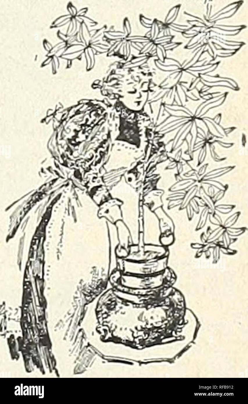 Catalogue of autumn bulbs : 1898  Seed industry and trade