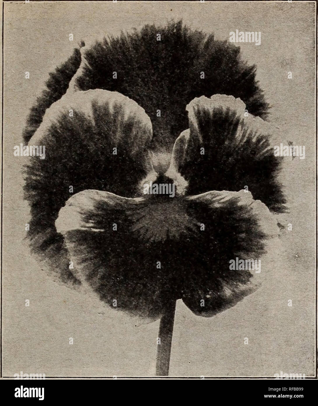 Catalogue 1915 Seeds Bulbs Shrubs Seeds Catalogs Vegetables