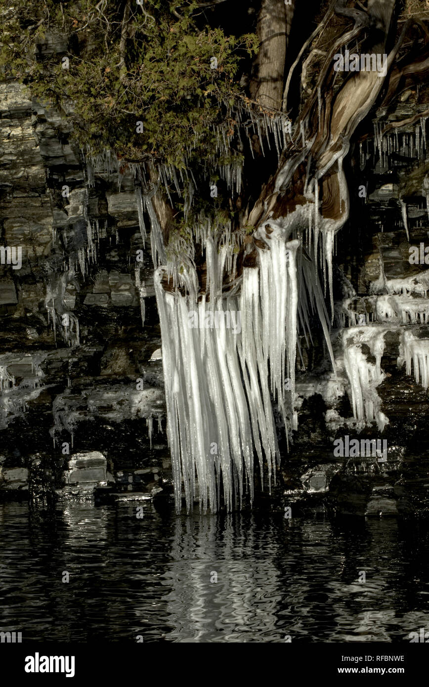icicle roots - Stock Image