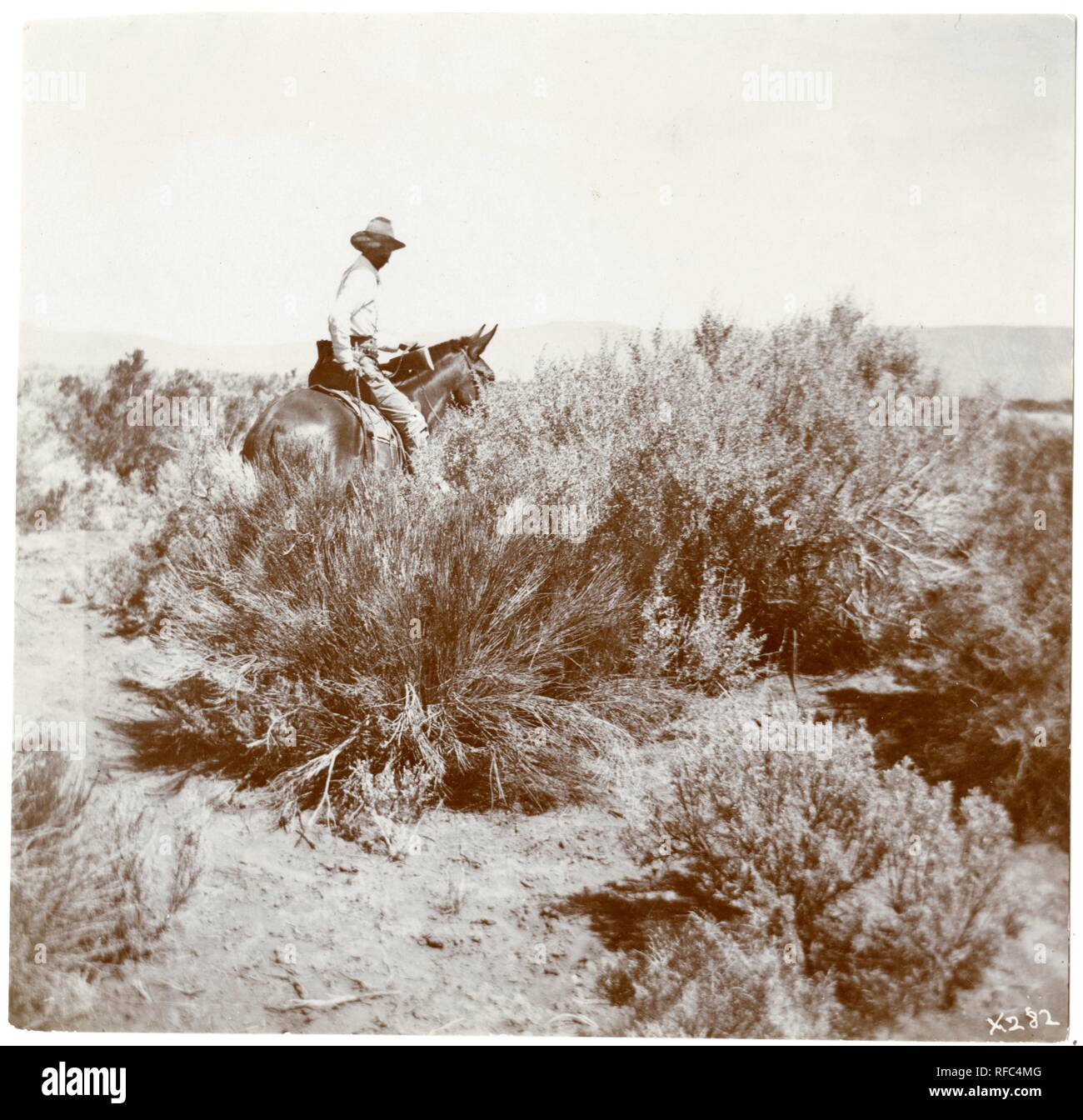 RU 007267, Box 5, Folder 12; 'Photograph taken for Vernon Orlando Bailey during his work as field naturalist for the United States Department of Agriculture Bureau of Biological Survey or its predecessor, Division of Economic Ornithology and Mammalogy, in Nevada and California in 1898.' - Stock Image