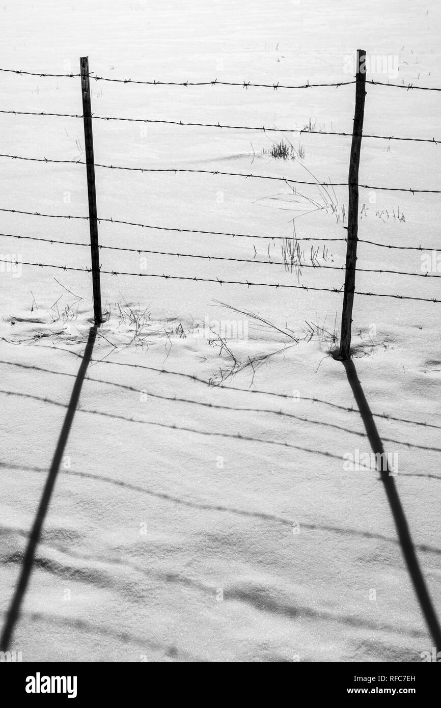 Black & white view of barbed wire fence casts shadows on fresh snow; Vandaveer Ranch; Salida; Colorado; USA - Stock Image