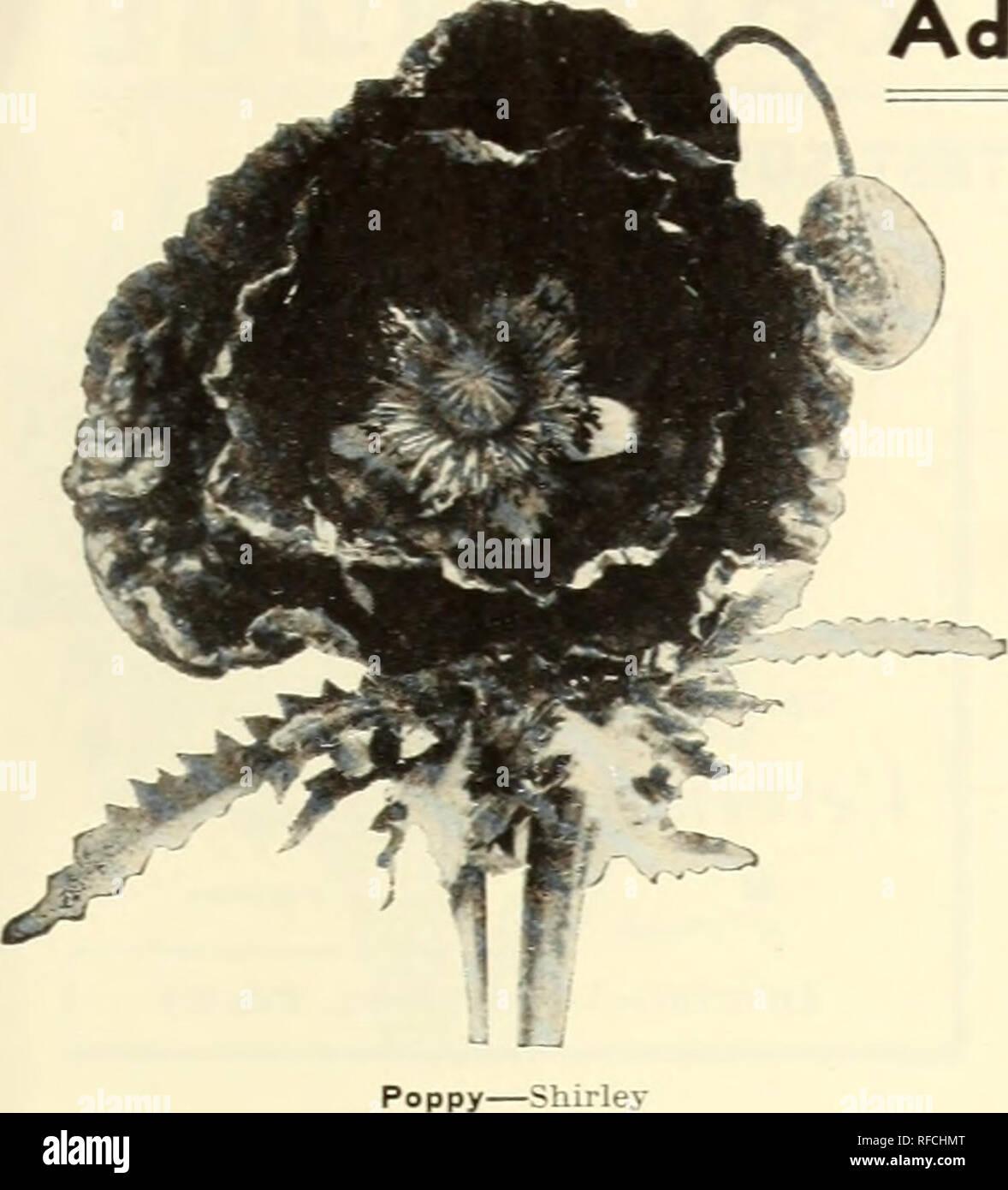 Catalog 1946 Magnolia Seeds Are Good Seeds Seeds Catalogs