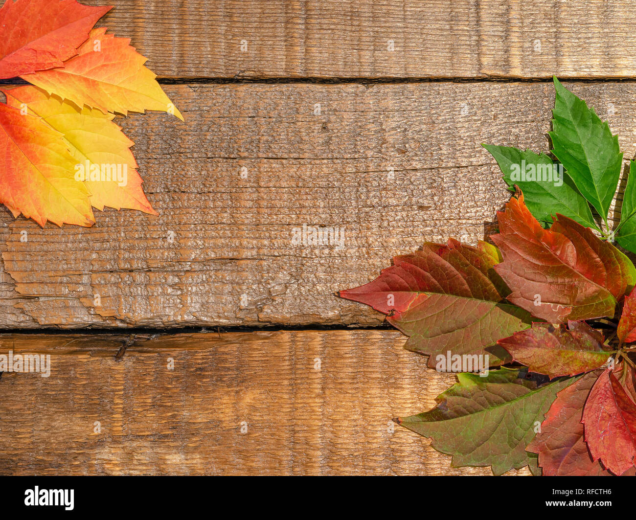 Rustic old barn wood background background with autumn leaves and copy space. - Stock Image