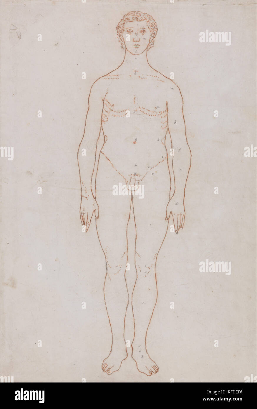 A Comparative Anatomical Exposition Of The Structure Of The Human