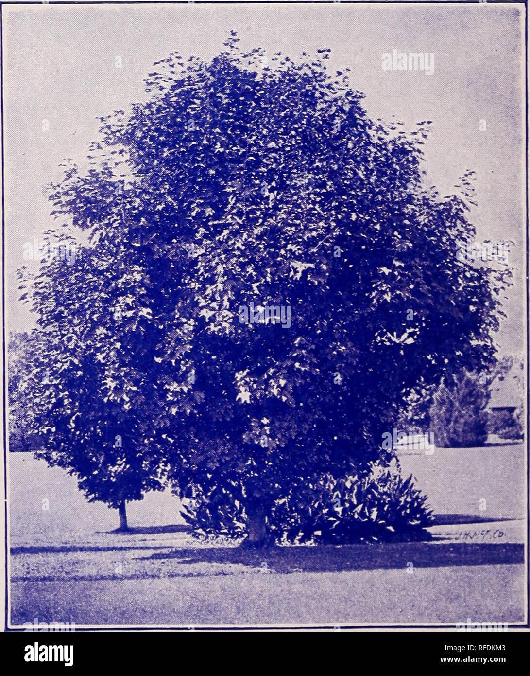 Semi-annual trade list : spring 1902  Nursery stock