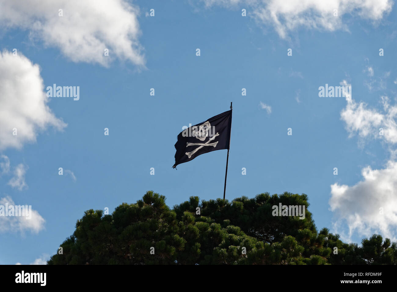 The black and white, jolly roger, skull and cross bones pirate flag flies high from a green tree. - Stock Image