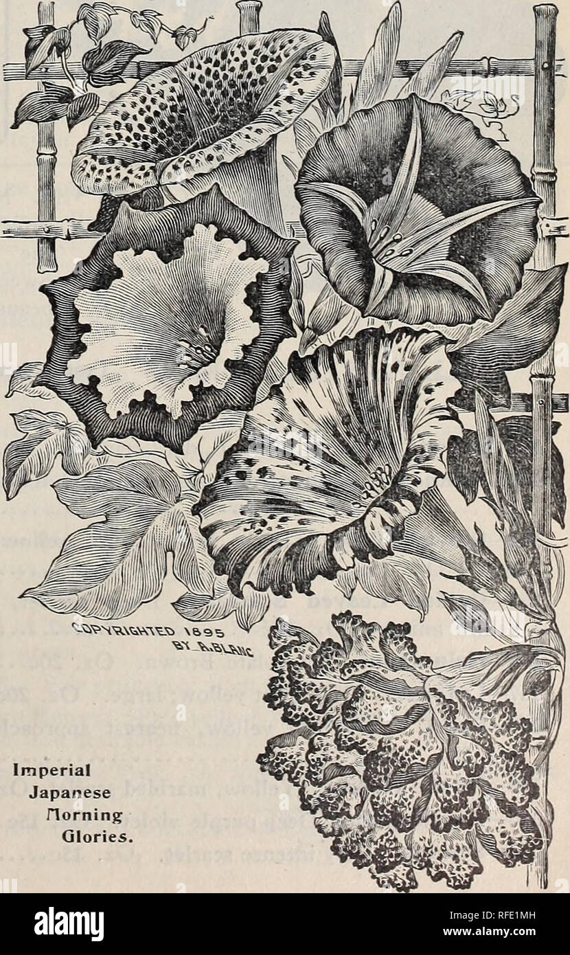 1902 year book : everything for the farm and garden  Nursery stock