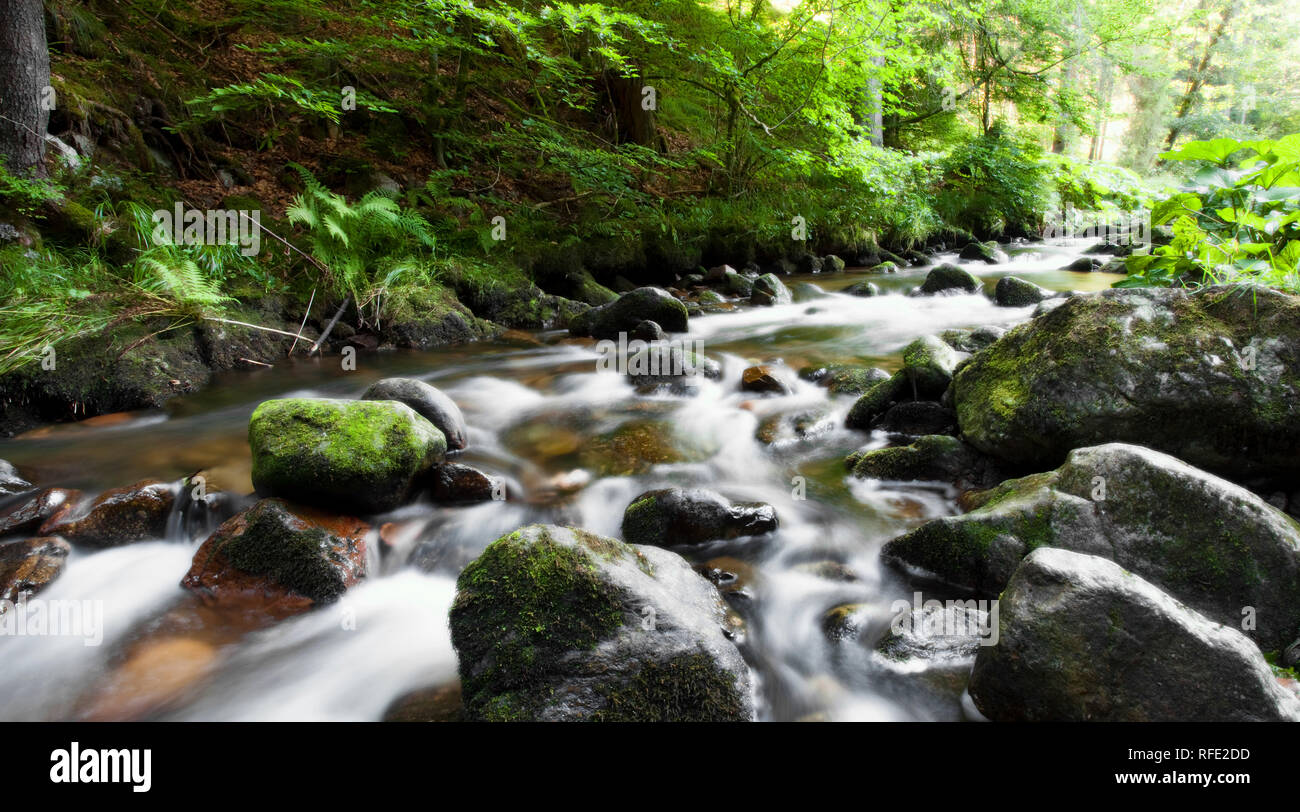 River Into the Forest - Stock Image