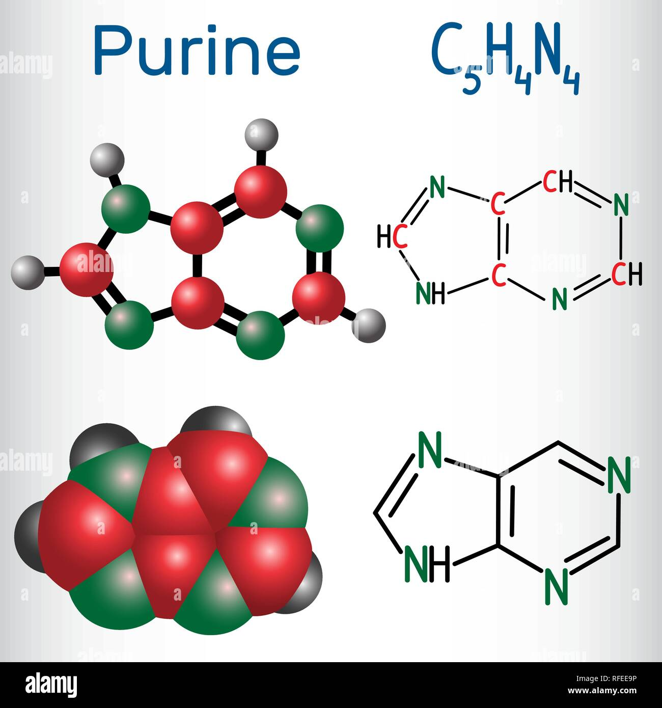 Purine molecule, is a heterocyclic aromatic organic compound. Structural chemical formula and molecule model. Vector illustration Stock Vector