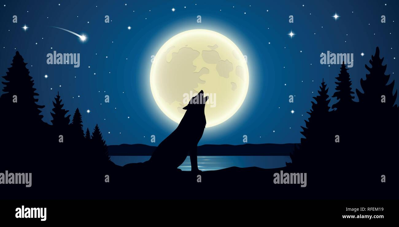 wolf howls to the full moon in a starry night vector illustration EPS10 - Stock Image