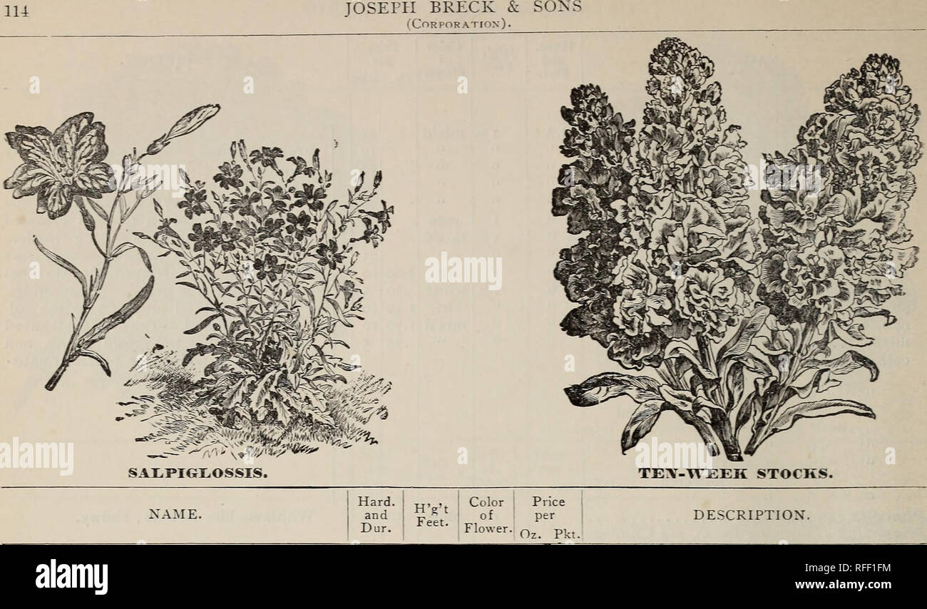 . Annual descriptive catalogue : seed &c.. Nursery stock Massachusetts Boston Catalogs; Vegetables Seeds Catalogs; Flowers Seeds Catalogs; Bulbs (Plants) Catalogs; Grasses Seeds Catalogs; Gardening Equipment and supplies Catalogs; Fruit Catalogs. Prince's Feather, see Amaranthus cruen- tus Prickly Poppy, see Argemone Pyrethrum (Feverfew) aureum (Golden Feather) hhP âGolden Gem âselaginoides âdiscoideum atrosanguineum hP hybrids, single âdouble Quaking Grass, see Ornamental Grasses Ragged Robin, see Lychnis Ranunculus, asiaticus superbissimus thhP Rhodanthe, see Everlastings Ricinus (Castor - Stock Image