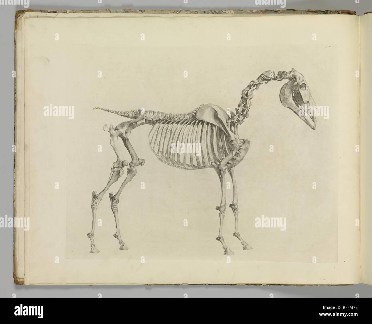 George Stubbs British Liverpool 17241806 London The Anatomy Of