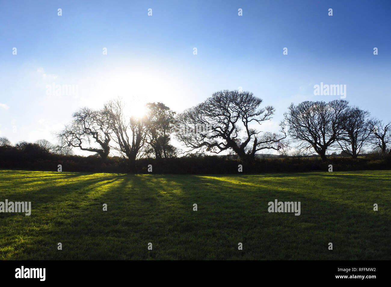 Trees in silhouette against a setting sun - John Gollop - Stock Image