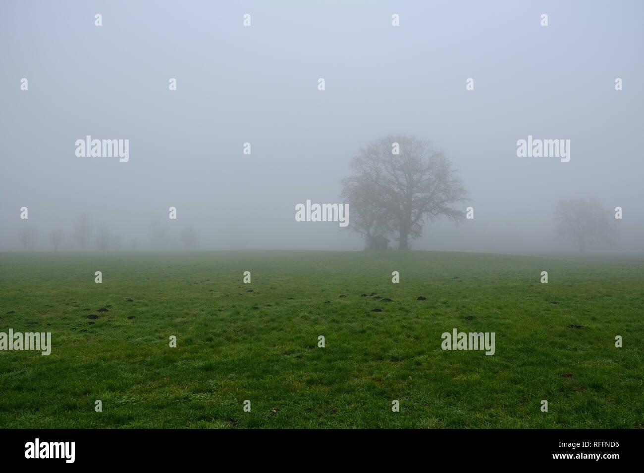 Nebel in Oberbayern bei Eberfing - Stock Image