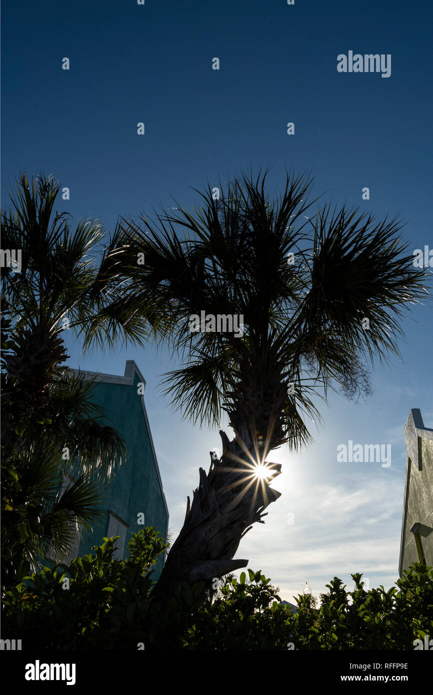 Palm tree at sunset with sunstar. - Stock Image