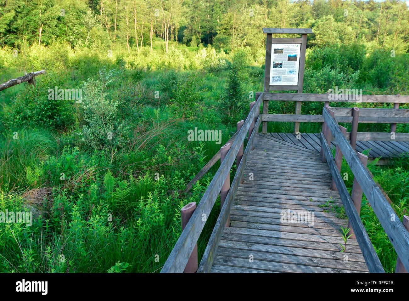 Ortel Marsh, Rhineland-Palatinate, Hunsrueck, Germany - Stock Image