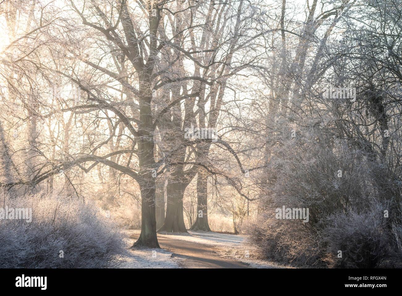 Frost in Leipzig, Morgenstimmung im Clara-Zetkin-Park bei aufgehendem Sonnenlicht und vereisten Bäumen - Stock Image