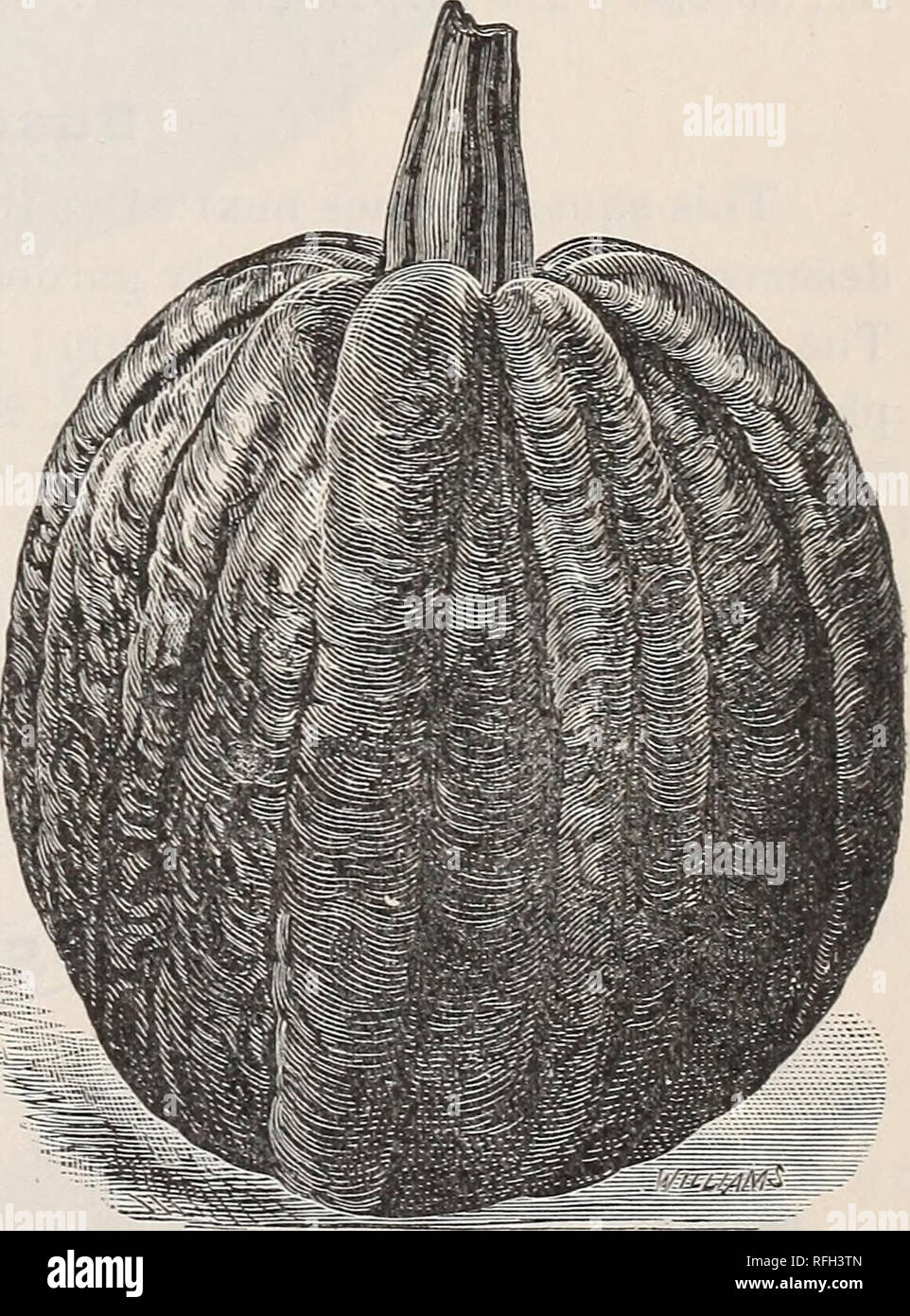 Seed catalogue for 1900 : seed potatoes, corn, grain and
