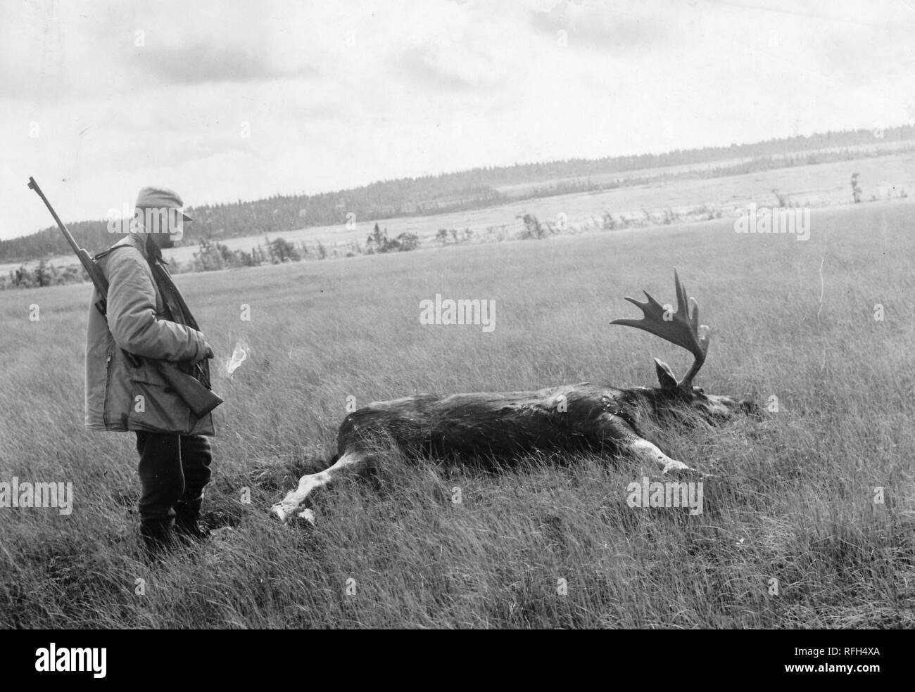 Black and white photograph, shot on an angle, of a middle-aged man, standing in full-length profile view, wearing a hunting jacket and cap, with a rifle slung over his shoulder, and with a dead deer with large antlers, likely a Caribou or Reindeer (Rangifer tarandus) lying in the grass at his feet; with trees and a body of water visible in the background, photographed during a hunting and fishing trip located in Alaska, USA, 1955. () - Stock Image