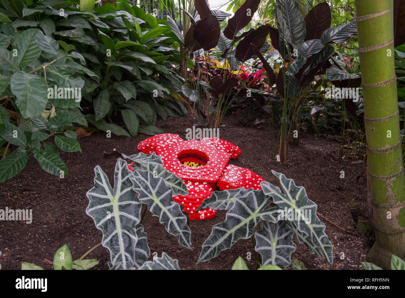 Corpse Lily High Resolution Stock Photography And Images Alamy