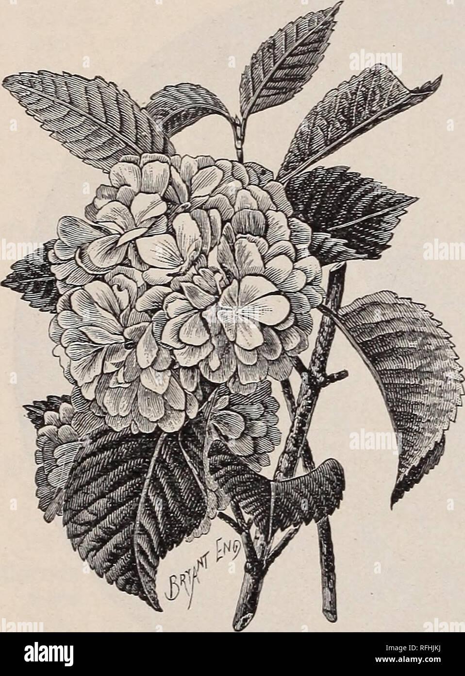 Montrose Nurseries : ornamental trees, shrubs, evergreens