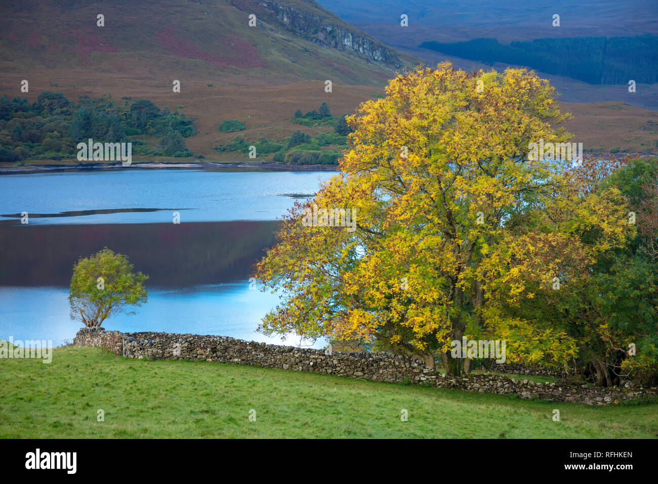 Autumn tree on the shore of Dunlewy Lough, County Donegal, Ireland. - Stock Image