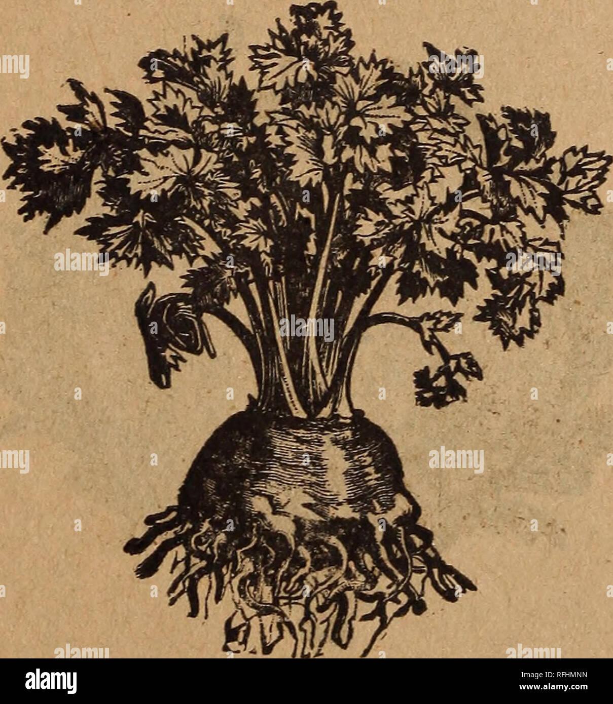 . Garden and farm seeds. Nursery stock Wisconsin Milwaukee Catalogs; Vegetables Seeds Catalogs; Flowers Seeds Catalogs; Agricultural implements Catalogs. %l)to. ffojs, 287 @ro»e etrafje, ättitnmuree, 5Bi§. 14 ^flanjeburd) bic gäbjgfett au§ ftd^ felbft in §0= bem (Srabe ju bleicben. *£adet 5c, Unje 20c, i ^funb 65c, $fuub $2.15. , &avtwtlt'ä VßttUction. (Sine ber atlerbeften Sorten für ben SJcarft, ba er fid) ungemein gut hält, ©ebr feft unb niemals bofcl. *ßadet 5c, Uiue 15c, Vi $fb. 45c, Pfb. fl.40. Söetfter äUnme, SSon oorgugtidjer Qualität. $acfet 5c, Unje 20c, Vi $fb.65c, Sßfb. $18.0.  - Stock Image