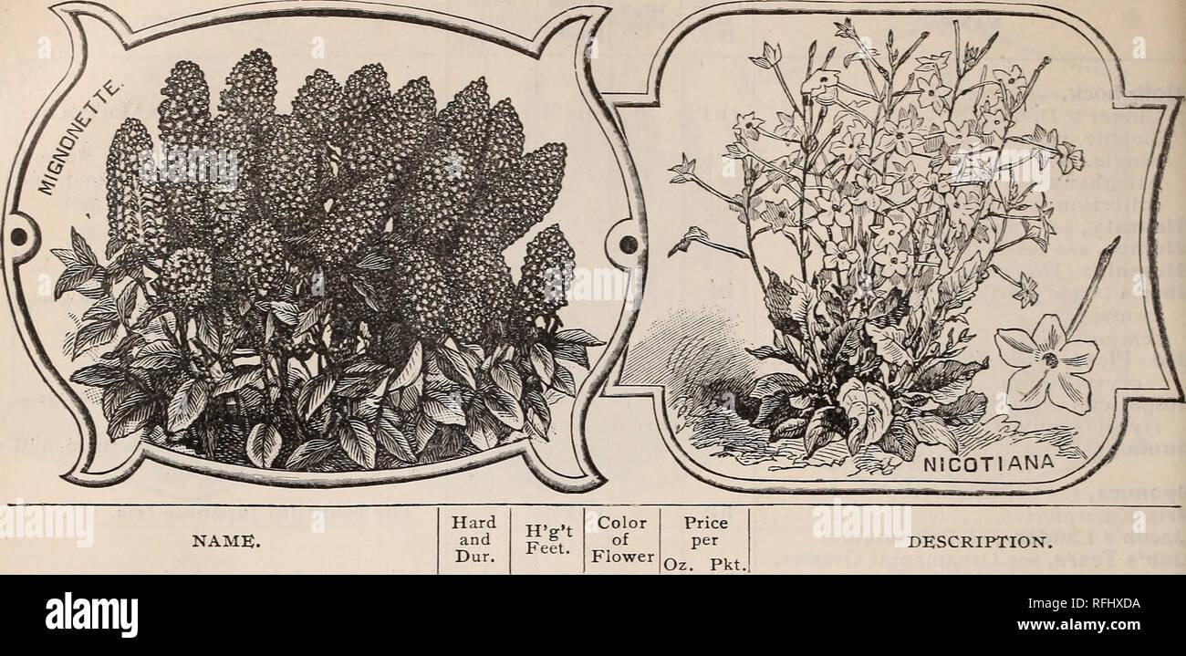 Annual descriptive catalogue : seeds &c   Nursery stock