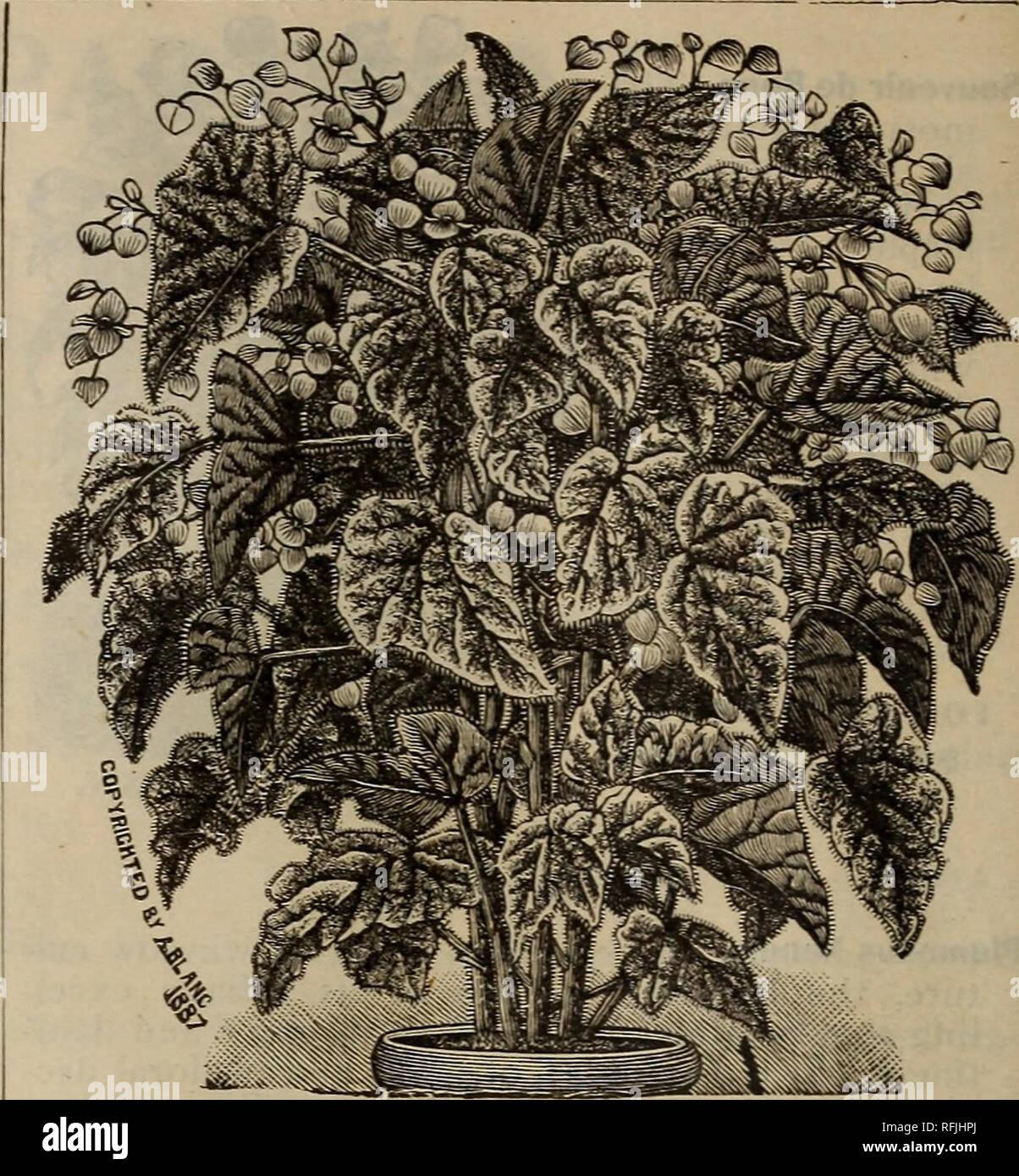 . Spring 1899. Nursery stock Ohio Catalogs; Vegetables Seeds Catalogs;  Flowers Catalogs; Bulbs (Plants) Catalogs; Plants, Ornamental Catalogs; ...