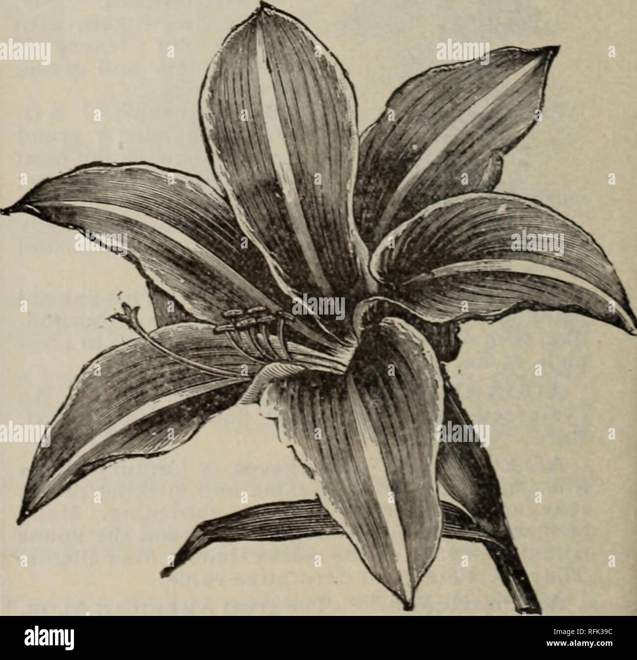 Annual Catalogue 1899 Native And Exotic Plants Trees Shrubs