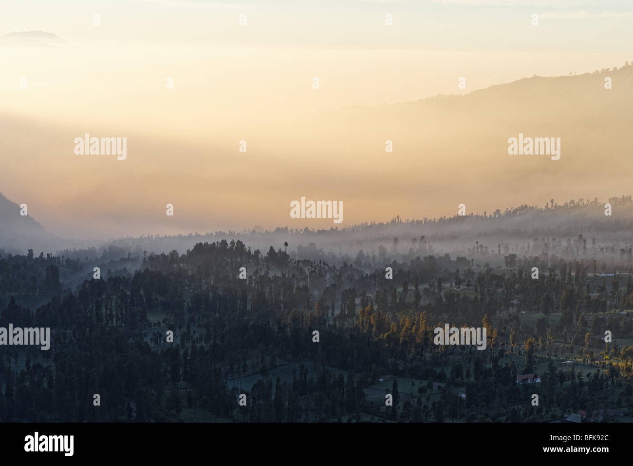 Mist mood on the plateau at the volcano Mt. Bromo at sunrise, clouds of mist between trees, first rays of sunshine are making their way - Location: In - Stock Image