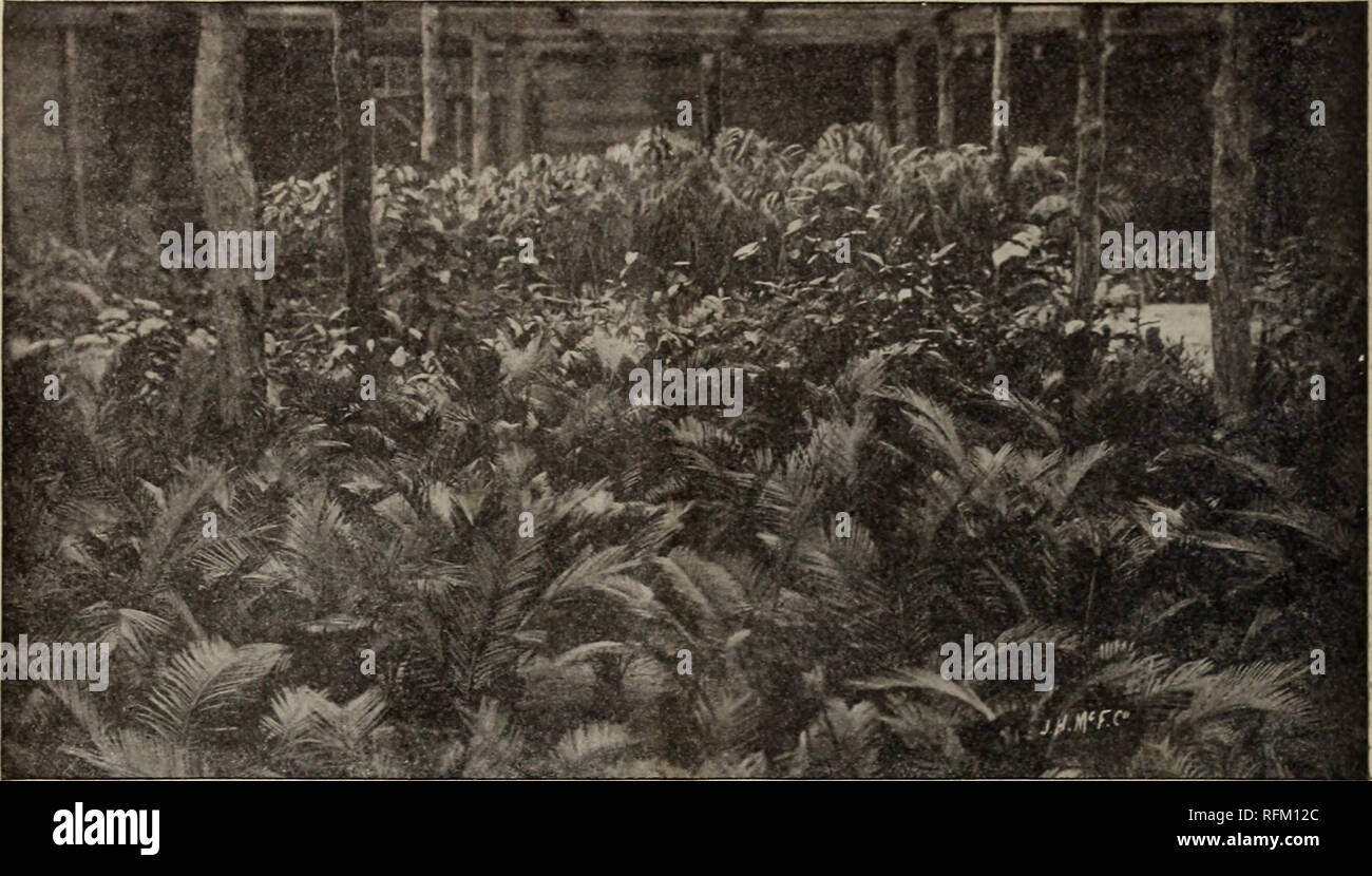 Annual catalogue 1899 native and exotic plants, trees