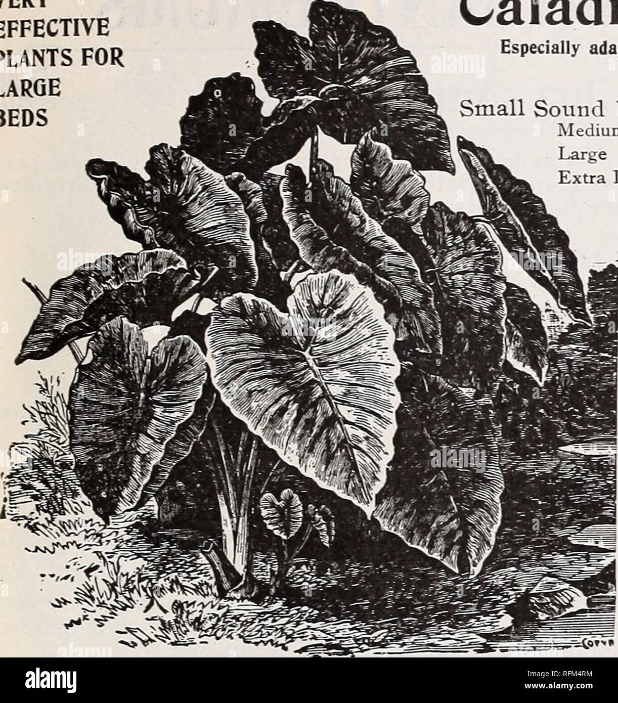 """. Michell's highest quality seeds. Nursery stock Pennsylvania Philadelphia Catalogs; Flowers Seeds Catalogs; Vegetables Seeds Catalogs; Fruit Catalogs; Agricultural implements Catalogs. [Sjo 1Q18 Market St. Philadelphia,Pa.<d