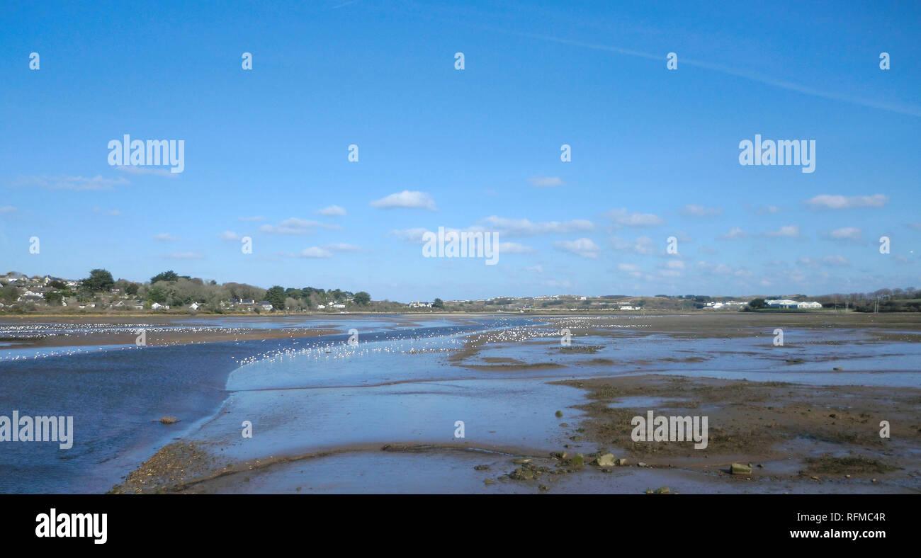 Hayle Estuary RSPB, Lelant Saltings, Cornwall, England, UK. Stock Photo
