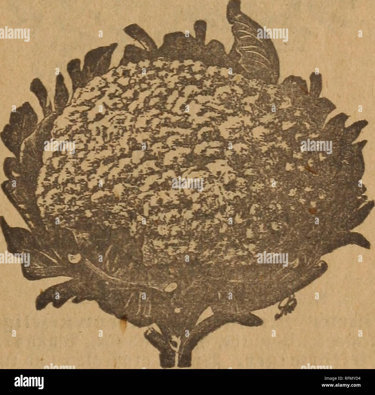 Theo  Koss' seed catalogue for 1899 : the road to successful
