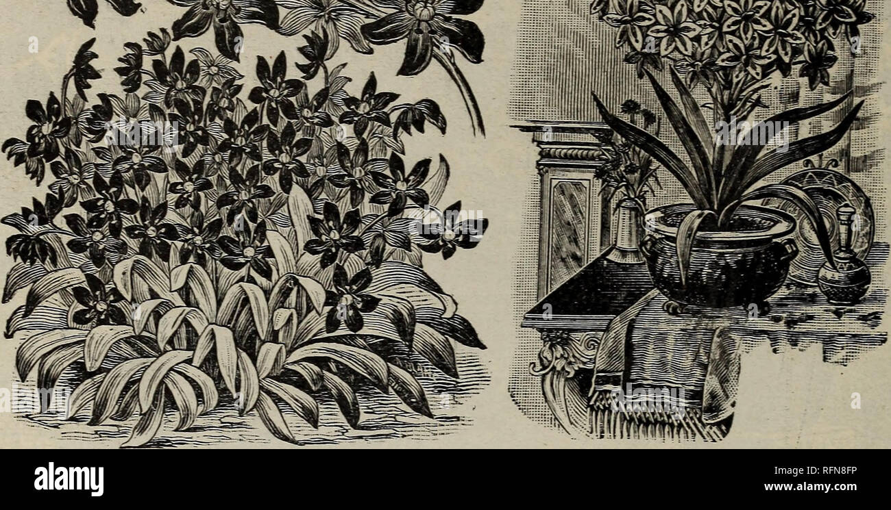 Decorative Butterflies Oriental Flower Vase Ceramic 20th Century Aromatic Flavor