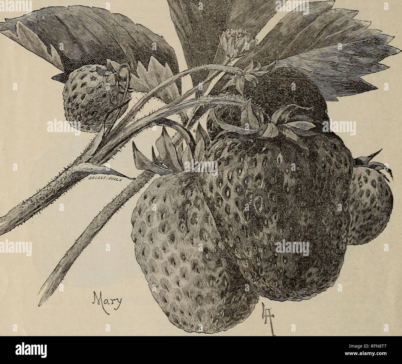 Price list of pot-grown and layer strawberry plants : with
