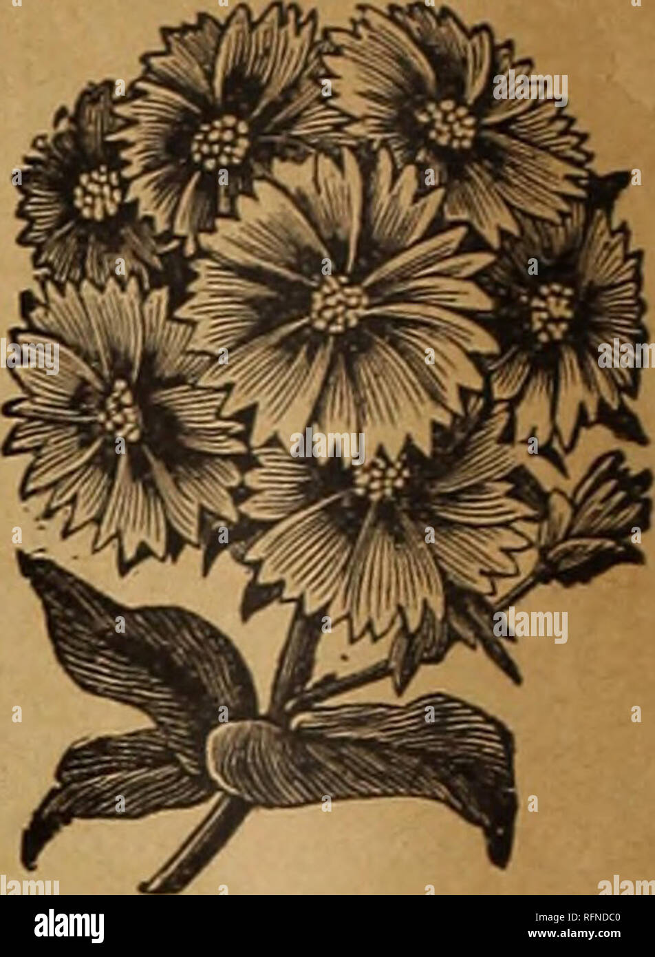 . Nebraska Seed Co.'s annual catalogue : reliable garden and farm seeds. Nursery stock Nebraska Omaha Catalogs; Flowers Seeds Catalogs; Vegetables Seeds Catalogs. 83. Pansy, Odier, or Five Blotched—A magnificent variety, each pedal having a large blotch with clearly defined margin.. .10c 84. Pansy, Striped—Q u e e r 1 y marked and striped, producing immense blossoms of the most exquisite and showy tints 10c 85. Pansy, German Extra- Choice, mixed 10c 86. Pansy, fine, mixed 5c PAGES 54 TO 57. PHLOX DRUMMONDII. These flowers are of extreme beauty, and are greatly admired by all. Their long durati - Stock Image